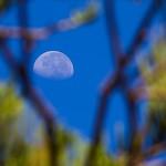 Feb 23 - Through the trees